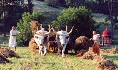 AGRICULTURAL BENIFITS OF COW