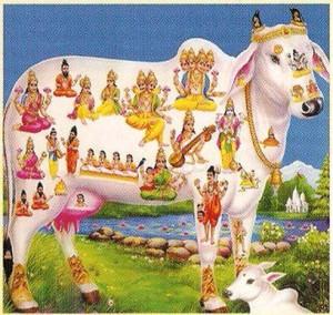 SPIRITUAL_Benefits_cow