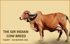 echonomical_Benefits_serve_cow_products