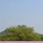 visit-hingolgadh-jasdan-gir-gujarat-india (10)