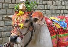 cow-puja-worship-gau-mata-importance-gomataseva.org