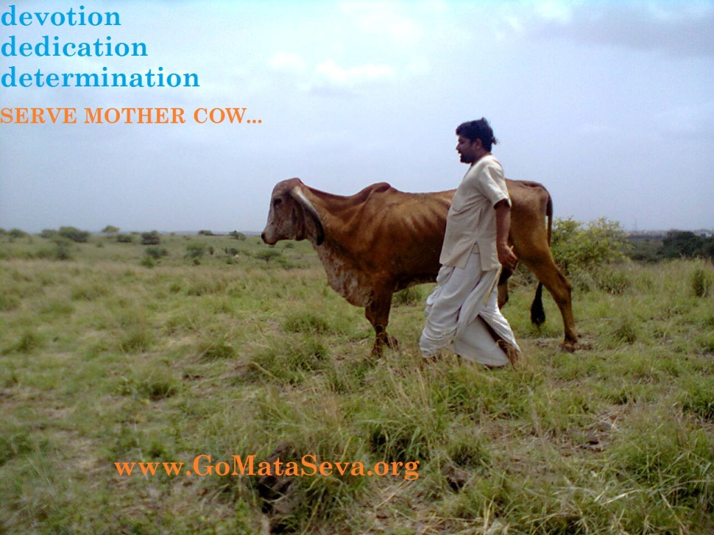 Cow Protection India