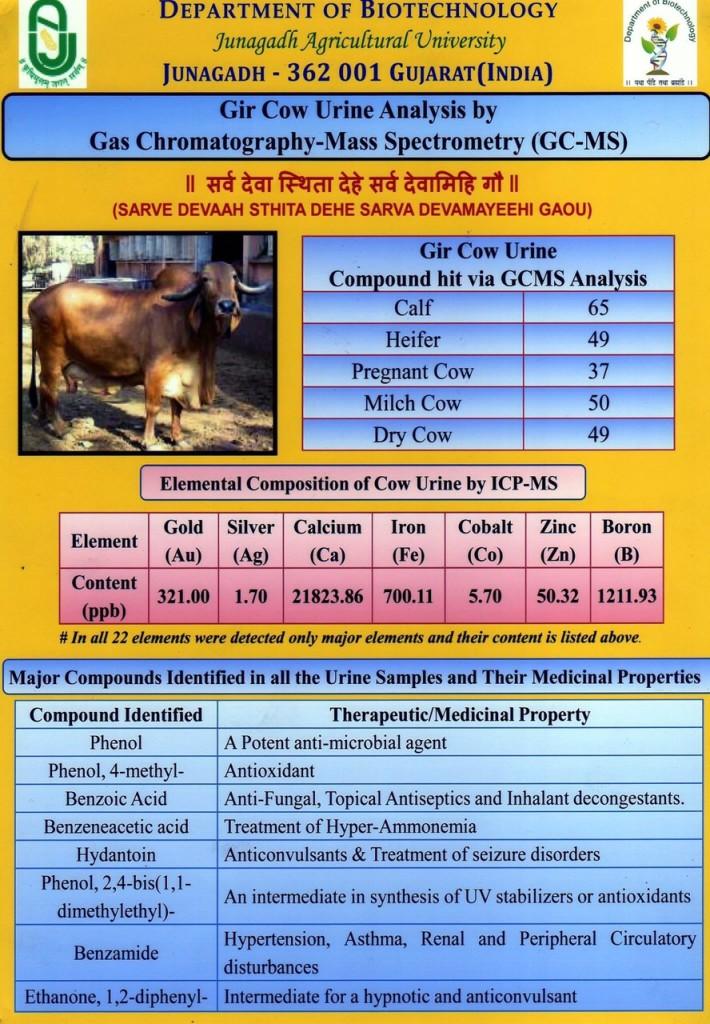 Useful Gir Cow Urine analysis to cure very serious disease
