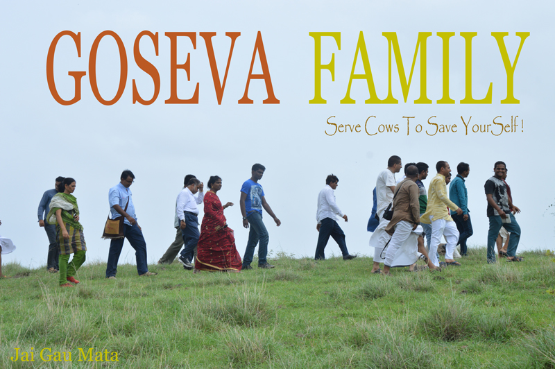 GoSeva Family in Opangrazing Land with Mother Cow at Jasdan