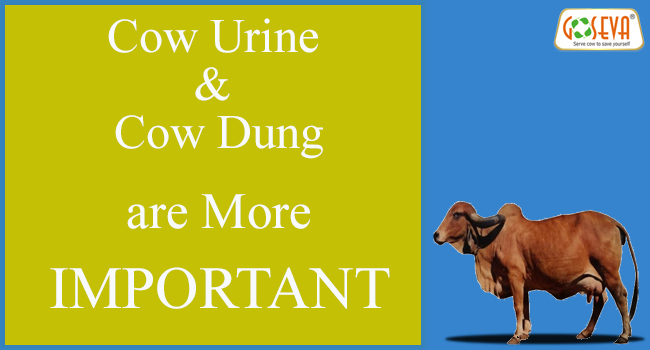 cow-dung-urine-important